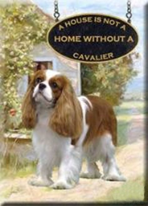 Zh Zodiac A House Is Not A Home Without A Cavalier King Charles