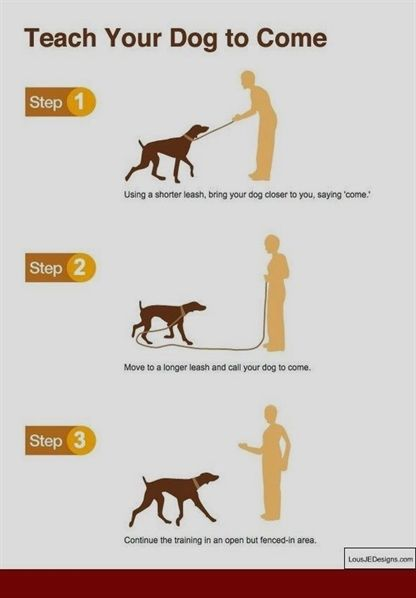 Train Your Dog To Be Well Behaved With These Tips Easiest Dogs