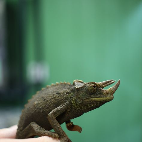 Happy #WorldLizardDay! Like our friends at Zoo Med said - there are chameleon reasons to celebrate today! Tell us how you're celebrating!