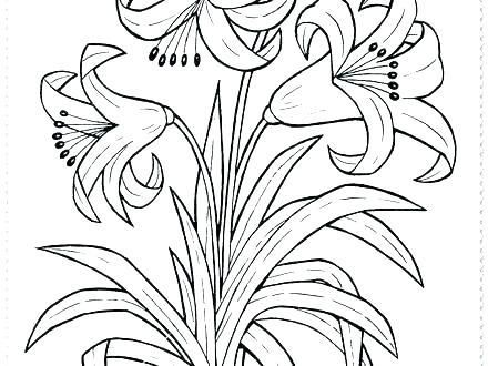 Coloring Spring Flowers Jasmine Flower Colouring Pages