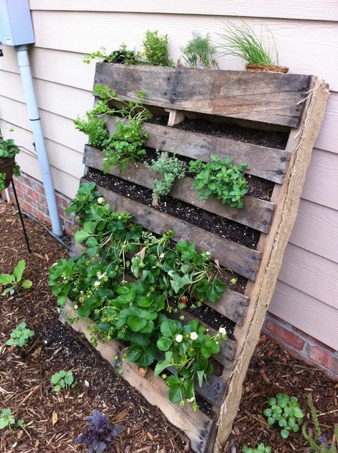 packing pallet garden:  hardware cloth & burlap on the back to hold it all in