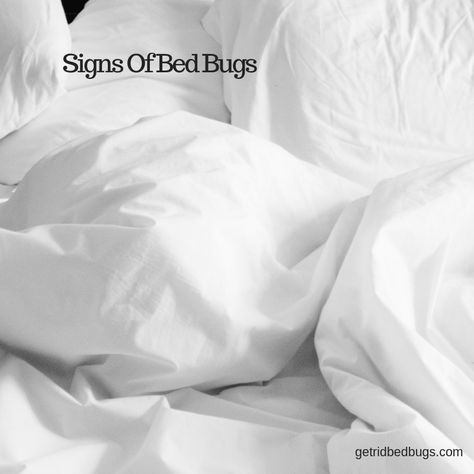 Learn How To Spot Signs Of Bed Bugs Bed Bugs Exterminator