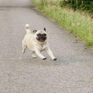 Urlaub Mit Hund Im Pielachtal Im Hotel Steinschalerhof No Urlaub Mit Hund Hunde Und Urlaub