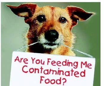 Are You Feeding Your Pet Contaminated Food Natural Pet Food