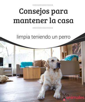 Consejos Para Mantener La Casa Limpia Teniendo Un Perro No Consigues Tener La Casa Limpia A Causa De Tu Perro Te D Perros Camas Para Perros Casas Para Perros