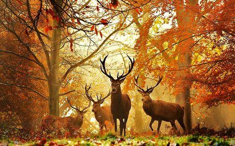 Buck Deer in woods