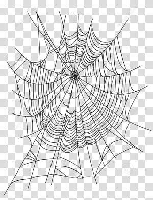 Spider Web Euclidean Illustration Creative Cartoon Spider Web Spider Web Icon Transparent Background Png Clipa In 2021 Spider Illustration Spider Web Drawing Clip Art