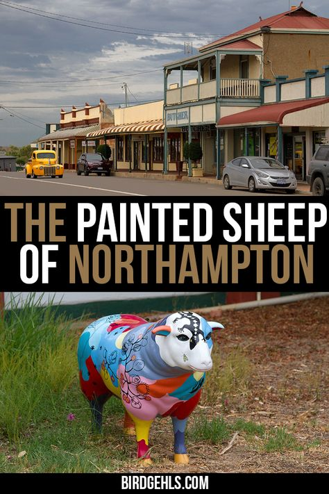 The Painted Sheep of Northampton WA: Wool Ewe Visit?