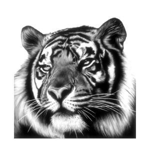 Tiger Face Art Print By Jerry Winick Dessin