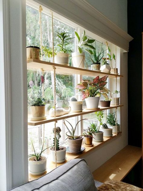 Hanging Plant Shelves – The Artful Roost Hanging Plant Shelves – The Artful Roost Diy Hanging Shelves, Ceiling Hanging, Indoor Plant Shelves, Shelves For Plants, Window Shelf For Plants, Hang Plants On Wall, Hanging Plant Diy, Hanging Plants On Fence, Indoor Plant Decor