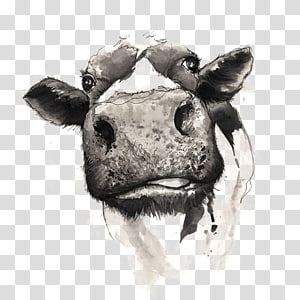 Gray Cattle Head Illustration Cattle Drawing Watercolor Painting Drawing Cow Transparent Background Png Clipart Cow Illustration Dog Pop Art Cow Drawing