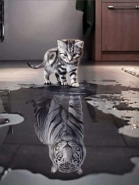 """""""Inside every small kitten there is a BIG cat waiting to leap out!"""""""