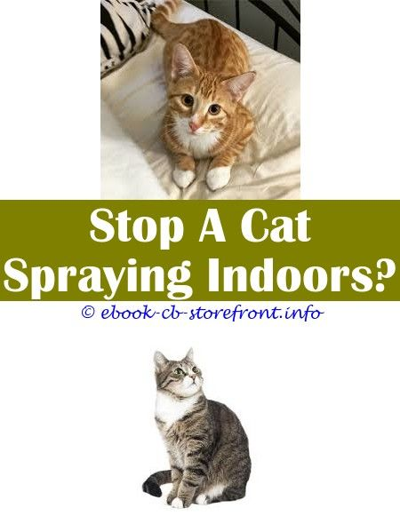 Difference Between Cat Spray And