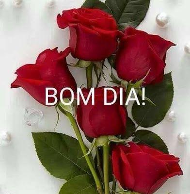 Frases De Bom Dia Rosa Vermelha Com Imagens Bom Dia Rosa