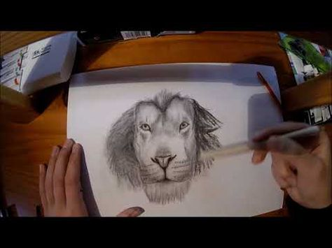 Tuto Comment Dessiner Un Lion Au Fusain Yanson Drawing