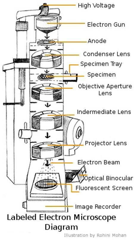A Study Of The Microscope And Its Functions With A Labeled Diagram Microscopic Electron Microscope Microscope Parts