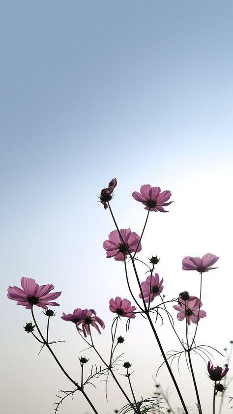 ดอกไม้::…Click here to download cute wallpaper pinterest ดอก...