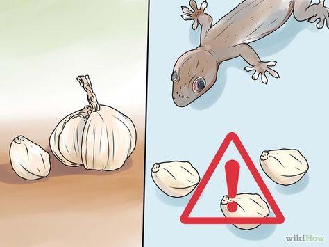 8 Ideas De Alejar Lagartijas Lagartijas Geckos Gecos