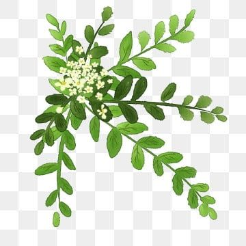Hand Painted Green Flowers Green Leaf White Flower Ornamental Plant Cartoon Flowers And Plants Fresh Flowers And Plants Landscape Flowers And Plants Hand Pai In 2021 White Flower Pot Watercolor Flowers