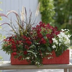 33+ Fleurs pour jardiniere plein soleil ideas in 2021