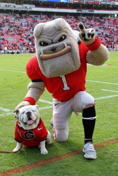 University of Georgia Bulldogs - Hairy Dawg and famed live mascot Uga VIII. Georgia Bulldog Mascot, Georgia Bulldogs Football, Uga Bulldog, Bulldog Pics, Bulldogs Ingles, Sick, Georgia Girls, English Bulldog Puppies, Poodle Puppies