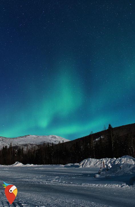 Polarlichter, Grizzlybären und viel mehr #alaska #amazing #nothernlights