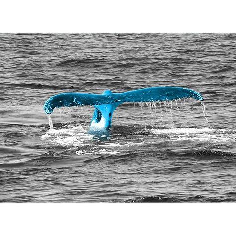 Glasbild Animals Whale Tail, Fotodruck in Zyanblau World Menagerie Farbe der Wandbefestigung: Gold, Größe: 64,2 cm H x 90 cm B x 0,5 cm T