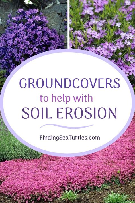 15 Best Flowering Ground Covers for Sun - Finding Sea Turtles 15 Best Flowering Ground Covers for Su Ground Cover Plants Shade, Ground Covers For Sun, Ground Covering Plants, Best Ground Cover Plants, Ground Cover Flowers, Perennial Ground Cover, Steep Hill Landscaping, Front Yard Landscaping, Gardening