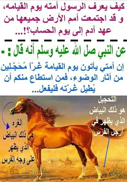Pin By Aissa On ما معنى Islam Facts Cool Words Islamic Quotes Quran
