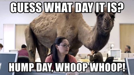 Top 18 happy hump day memes