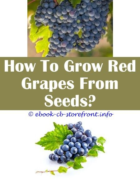 17 Unutterable How To Grow Concord Grapes From Seed Grape Plant Grape Growing Trellis Growing Grapes