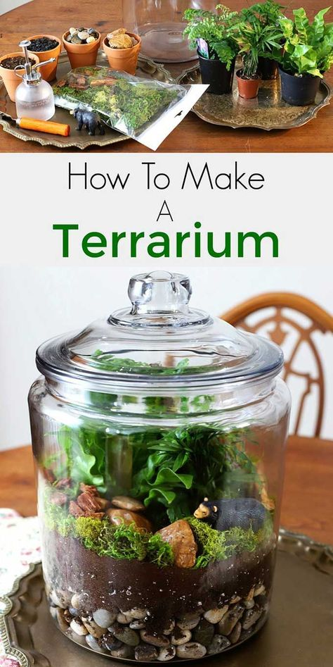 garden boxes #gardencare Easy step by step instructions for how to make a terrarium. Including the best terrarium plants, supplies needed and terrarium container ideas. #terrarium #diyhomedecor #gardening #gardeningideas #indoorgarden #indoorplants