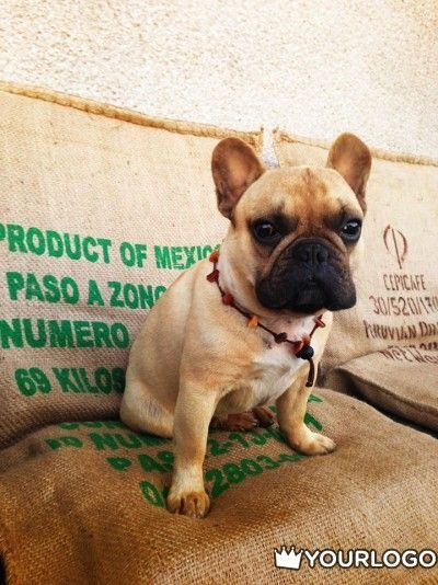 I M Not Part Of The Mexican Mafia French Bulldog Cute Animals