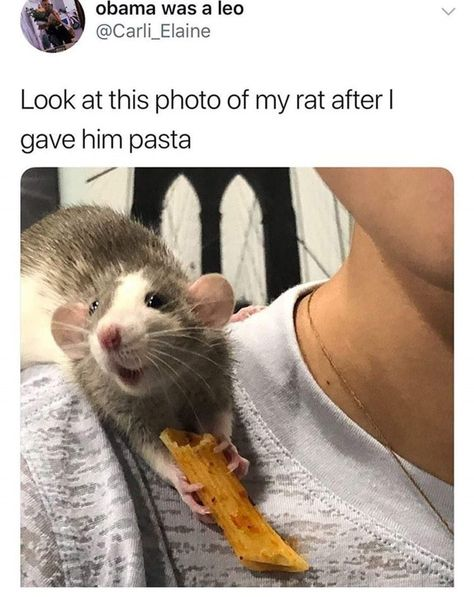 17 Pictures of Rats Being The Most Adorable Pets | Cuteness