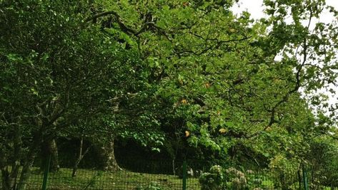 Capela Nossa Senhora das Vitórias @ Mata-Jardim José do Canto: opens everyday from 10 a.m. to 6 p.m.  3€ . . #garden #lagoadasfurnas #furnaslake #chappel #church #neogotico #neogothicarchitecture #neogothic #visitazores #azores #azoren #açores #botanic