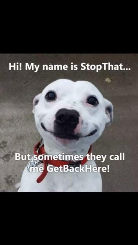 20 Hilarious and Funny Animal Memes Make Me Laugh