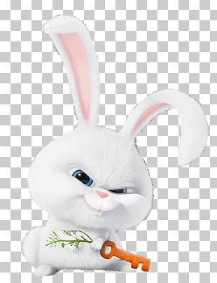 Snowball Domestic Rabbit Dog Pet Png Clipart Animals Cuteness Desktop Wallpaper Dog Domestic Rabbit Free Png Domestic Rabbit Rabbit Wallpaper Pet Rabbit