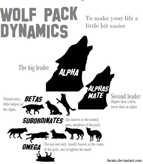 When meeting a pack of wolves, knowing how to recognize their intent, as well as how to escape will save you. Keep reading to see the tricks!