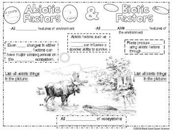 Biotic Factors And Abiotic Factors Squiggle Sheets Understanding Checkpoint Abiotic Biotic Science Doodles