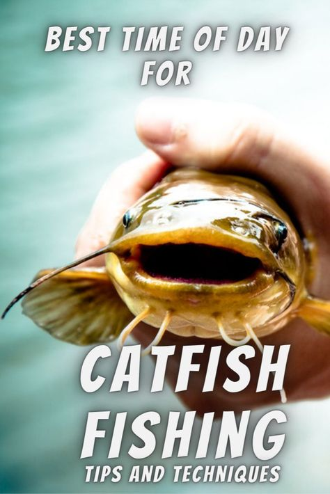 The Best Time Of Day To Catch Catfish Tips And Techniques Fishing Skillz Catfish Catfish Fishing How To Catch Catfish