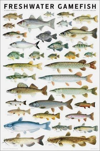 Fishing Guide Rs3 Fishing Pole Holder Fishing 613 Fishing Lures Svg Fishing Kayak With Motor Fishing Almana Fish Chart Freshwater Fish Bass Fishing