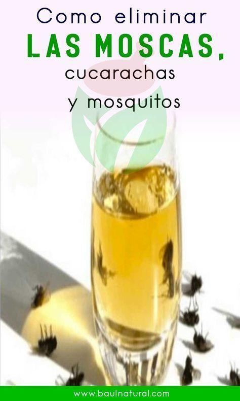 Hoy Te Vamos A Ayudar A Eliminar Estos Mosquitos Con Una Trampa Casera Y Así Te Hará Olvidar Remedios Para Cucarachas Eliminar Las Moscas Repelente Para Moscas