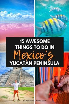 Barracuda | Cozumel, Yucatan peninsula, Around the worlds