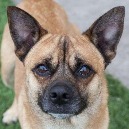 Dogs Dog Adoption Adoption Pets