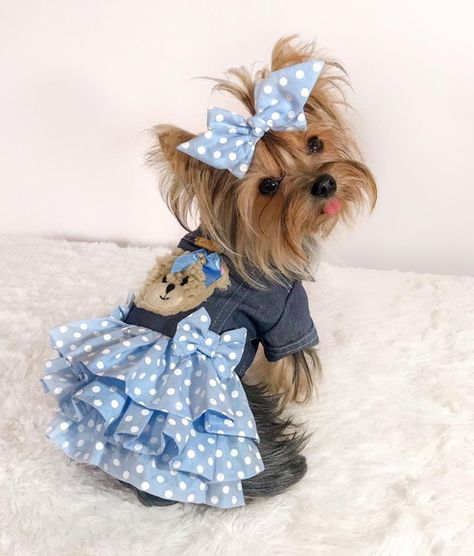 660 Ideas De Caninas En 2021 Ropa Para Perros Accesorios Para Perros Ropa Para Mascotas