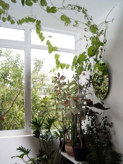 This Glorious Plant Will Turn Your Apartment Into A Garden Apartment Indoor Vines Ivy Plant Indoor Plants