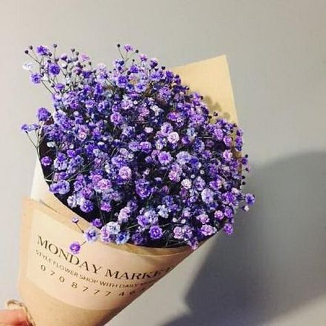 Grow your own flowers with these 100 pcs Purple Gypsophila Flower Seeds. Each pack contains 100 seeds. Highlights: Product Type: Bonsai Size: Small, Medium Climate: Temperate Applicable Constellation: Virgo Style: Annual Full-bloom Period: Summer Flowerpot: Excluded Classification: Novel Plant Function: Beautifying Use: Outdoor Plants Location: Courtyard Cultivating Difficulty Degree: Very Easy Type: Blooming Plants Variety: Gypsophila Seeds