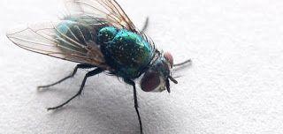 شركات تنظيف المنازل والشقق والفيلات في الرياض رش مبيد النظافة 0559099219 ابادة حشرات رش مبيد حش Animals Get Rid Of Flies Bee