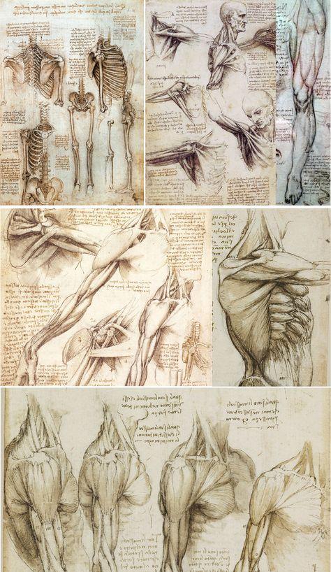 Anatomy Sketches, Art Sketches, Art Drawings, Drawing Faces, Human Anatomy Drawing, Human Body Anatomy, Human Anatomy For Artists, Skeleton Drawings, Renaissance Kunst