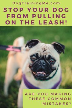 Wondering How To Stop Your Dog Pulling On The Leash During Walks